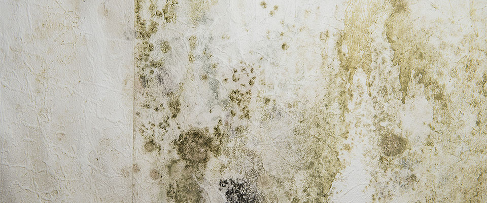Mold remediation from Safe Environmental
